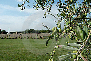 British Military Memorial And Olive Tree Stock Photo - Image: 21700690