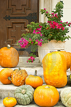 Pumpkins And Bougainvilla:  Halloween In The South Royalty Free Stock Images - Image: 21719459