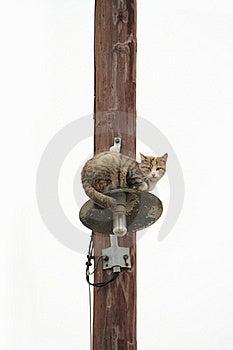 Stray Cat Royalty Free Stock Photo - Image: 21728675