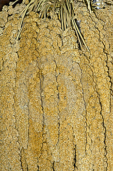 Millet Ears Stock Photo - Image: 21742110
