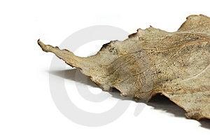 Dried Leaf Stock Image - Image: 21774701