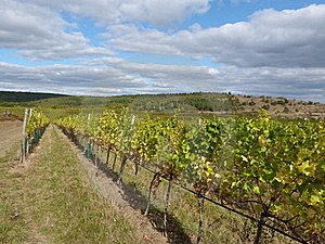 Vineyard  Royalty Free Stock Images - Image: 21774859
