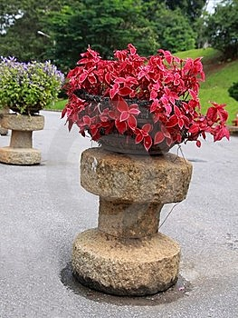 Red Ornamental Plants Royalty Free Stock Images - Image: 21790519