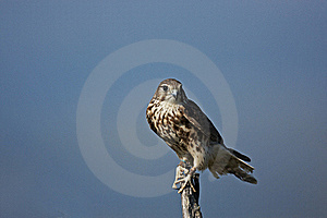 Merlin Royalty Free Stock Images - Image: 21800419