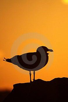 Gull At Sunset Stock Photos - Image: 21818123