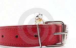 стекло собаки ворота Стоковые Изображения - изображение: 21818634