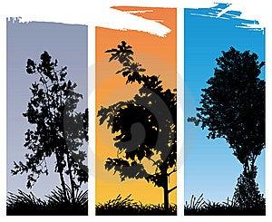 Trees Stock Photos - Image: 21819553