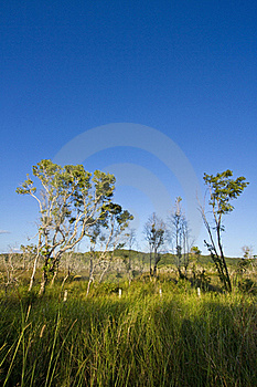 Tree And Clear Sky Royalty Free Stock Photo - Image: 21827805