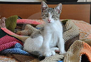 Kitten On Hand-knit Blanket Stock Image - Image: 21837561