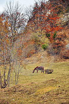 Horse And Car On Hill Stock Image - Image: 21881751