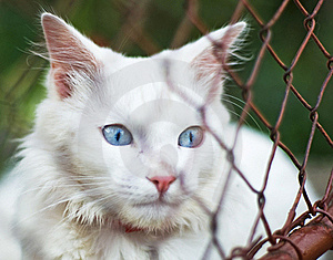 White Cat Behind Grid Royalty Free Stock Image - Image: 21884886