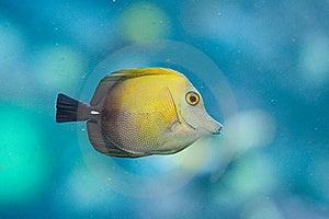 Yellow Fish Stock Image - Image: 21897691