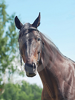Portrait Of Beautiful Black Mare Stock Image - Image: 21898591