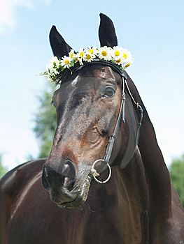 Portrait Of Beautiful Mare With Daisys Stock Images - Image: 21898624