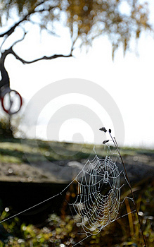 Autumn's Spiderweb Royalty Free Stock Images - Image: 21905449