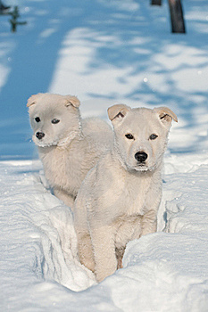 Two Puppies. Stock Images - Image: 21906034