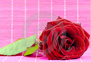 Red Rose Stock Photo - Image: 21928950