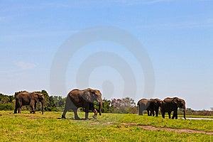 Elephants Walking  Between The Bushes Stock Image - Image: 21942521