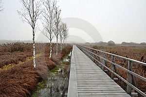Wooden Pathway Straight Forward Royalty Free Stock Images - Image: 21942629