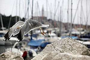 Seagull Stock Photo - Image: 21950140