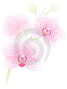 Orchid Branch Stock Image - Image: 21961261