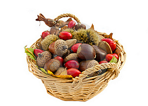 Fall Arrangement Royalty Free Stock Image - Image: 21964036