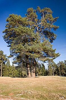 Beautiful Landscape Stock Image - Image: 21966401