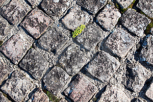 Texture Of Paving Stock Photos - Image: 21980983