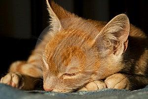 Cute Kitten Sleeping Royalty Free Stock Images - Image: 21986379