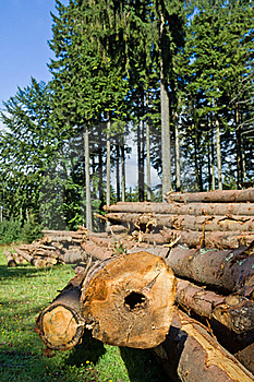 Forest Deforestation Stock Photography - Image: 21987422