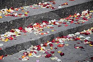 Petals Of A Rose Stock Photo - Image: 21988250