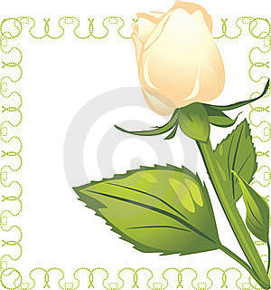 White Rose In The Decorative Frame Stock Photo - Image: 21995140