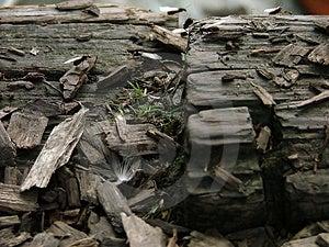 Un groupe de fourmis de vol sur des copeaux Photographie stock libre de droits