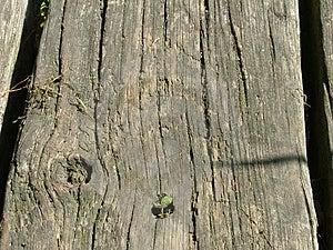 Faisceau en bois Photographie stock