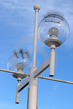 Seagull-proof Street Lamp Free Stock Photo