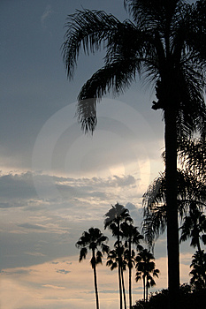 Palms Stock Photo