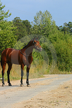 A Horse On The Road Stock Photo