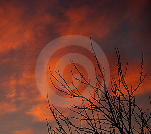 Bush At Sunset Stock Images