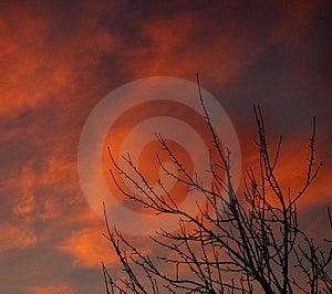 Bush på solnedgången Arkivbilder