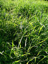Free Stock Photos: Grass Picture. Image: 221498