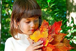 Autumn Maple Leaves.jpg Royalty Free Stock Photo - Image: 22038545