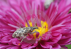 Bug Royalty Free Stock Photos - Image: 22052268