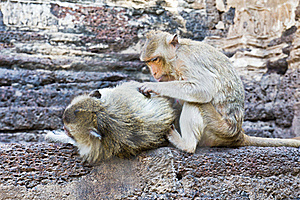 Family Of Monkeys Royalty Free Stock Photos - Image: 22058048