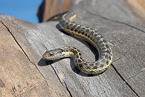 Snake Slithering In Tree Stock Images - Image: 22069034