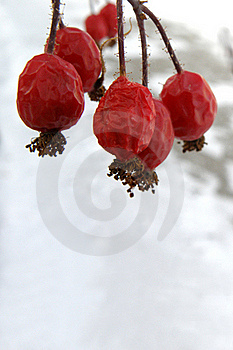 Frozen Red Berries Royalty Free Stock Image - Image: 22081286