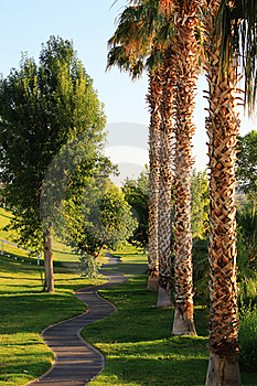 Palm Trees In Park Royalty Free Stock Photos - Image: 22082148