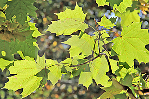 Autumn Leafs Stock Images - Image: 22083934