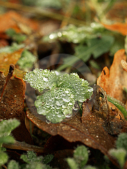 Autumn Dew Stock Images - Image: 22090424