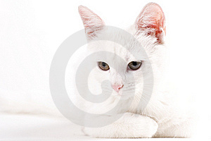 Little Cat Playing Royalty Free Stock Images - Image: 22097319