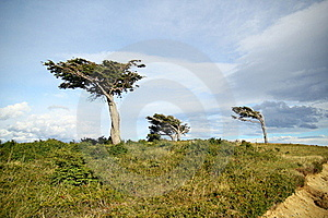 Tree Against The Wind Royalty Free Stock Photo - Image: 22117565